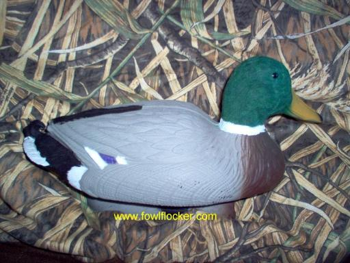 Mallard with Highlights